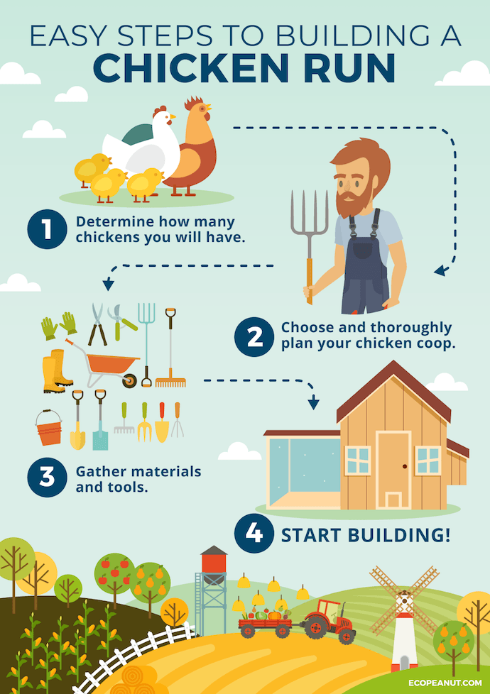 steps to build a chicken run graphic