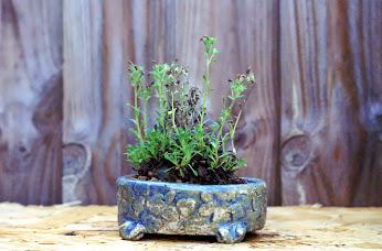 Voici mes plantes d'accompagnements Ta1Z1GnMYuiTjF-ar9SLBX2X6H9FwIegT4rhRP_F7g=w346-h228-p-no
