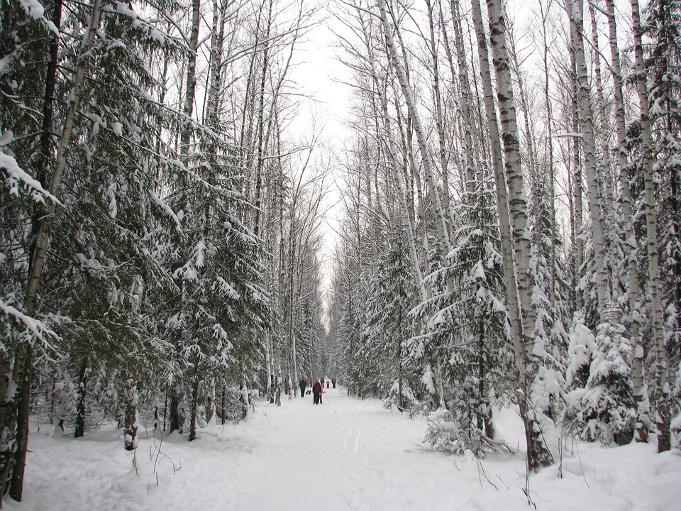 winter forest seen with people walking