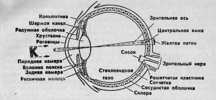 Контрольная работа анатомия глаза 6926