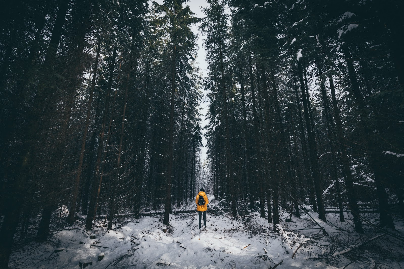 a person in the snowy woods