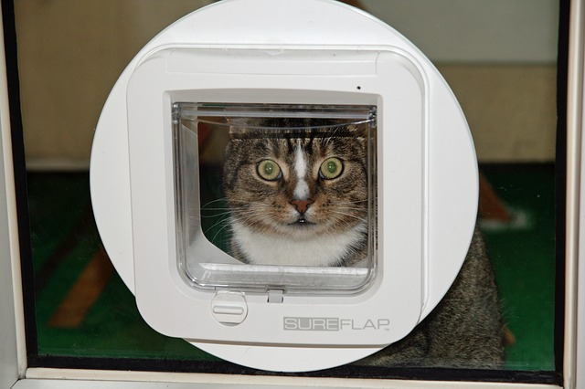 Cat flap training