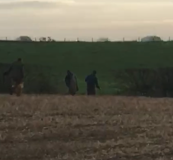 RSPCA appeal to trace four men for suspected badger baiting