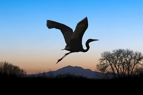 great-blue-heron-silhouette.jpg
