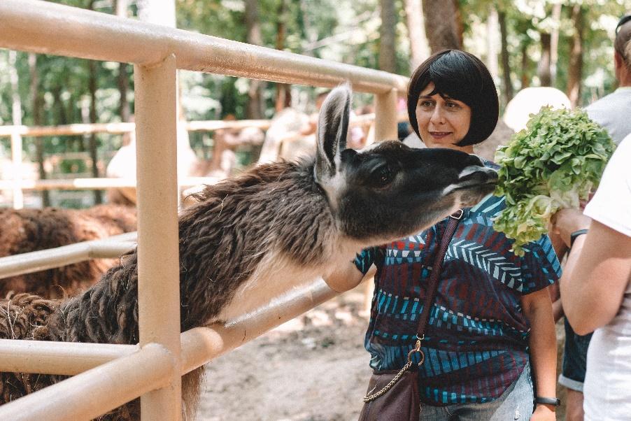 Une image contenant personne, extérieur, clôture, animal  Description générée automatiquement
