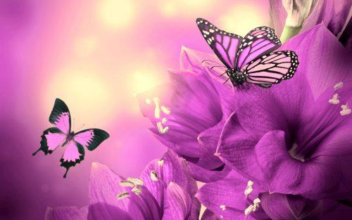 C:\Users\Надежда\Desktop\Pictures_butterflies_and_flowers_4-500x313.jpg