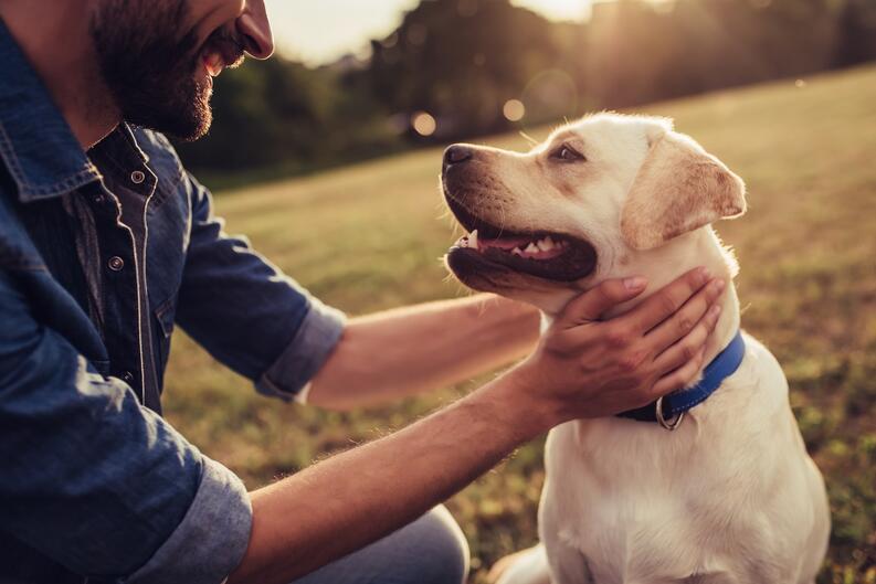 perro autismo apoyo video ternura 3