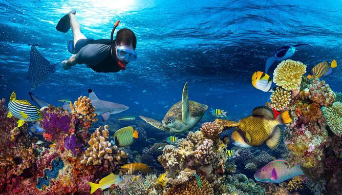 snorkeling picture iyaatra holidays