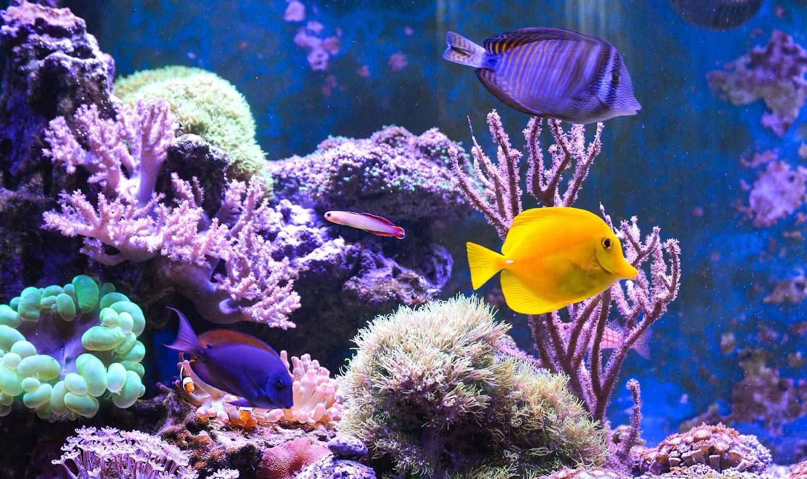 Treasure State Aquariums | Billings, MT
