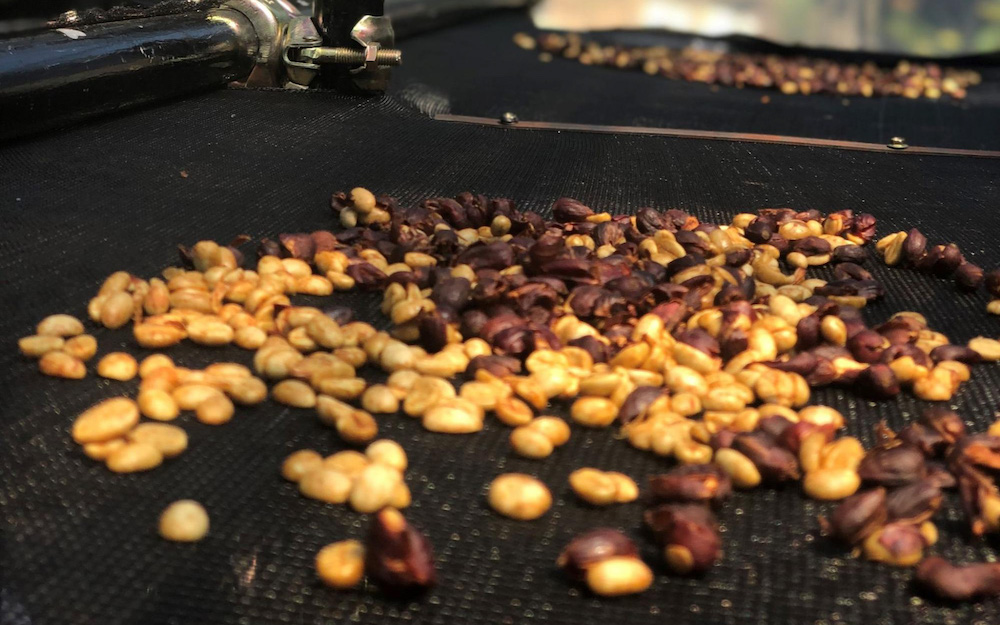 fermented coffee