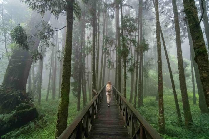 把水木巨木森道加入去阿里山的行程規劃,感受到阿里山森林的神秘感
