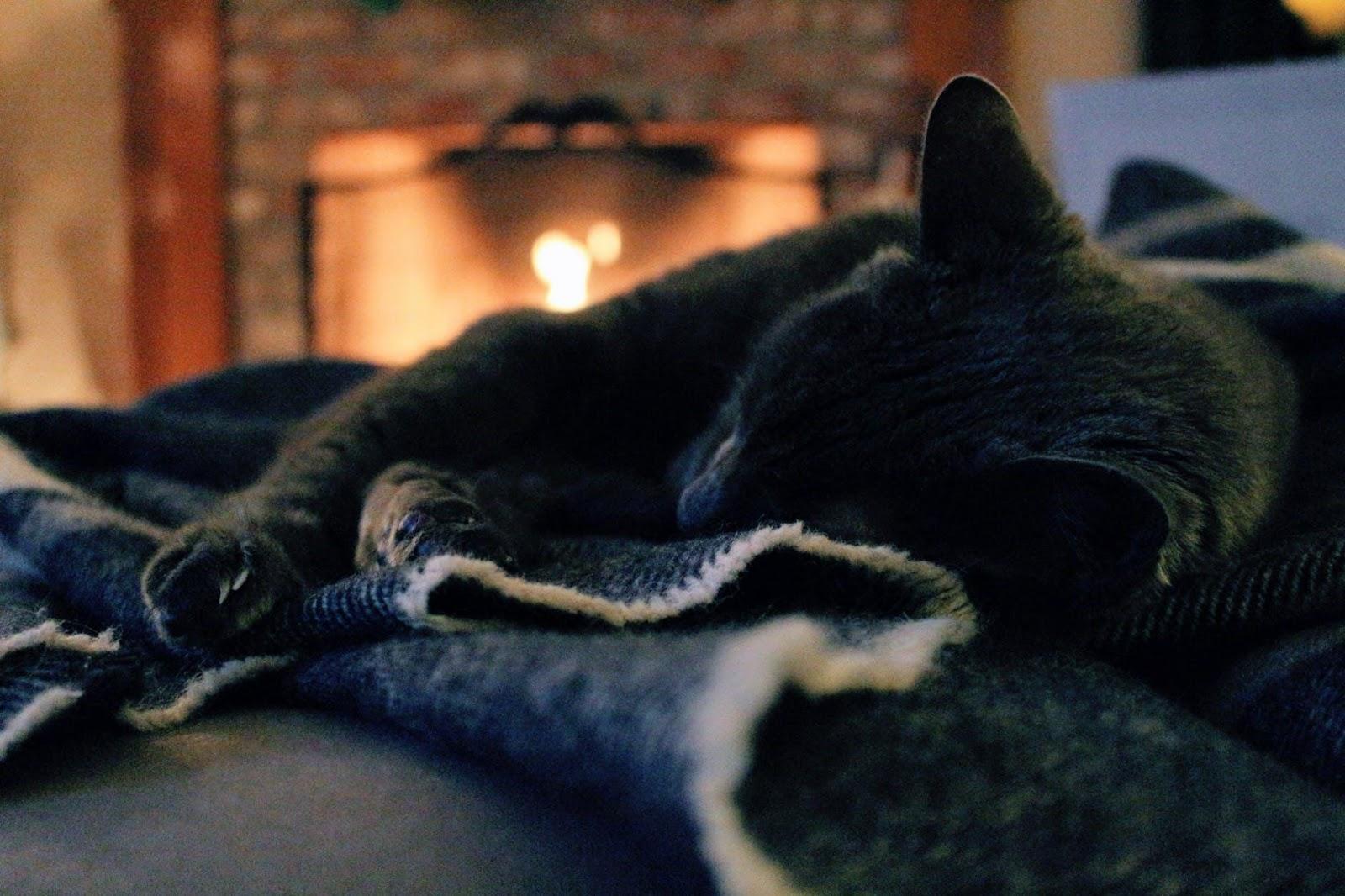 black cat in cozy blanket