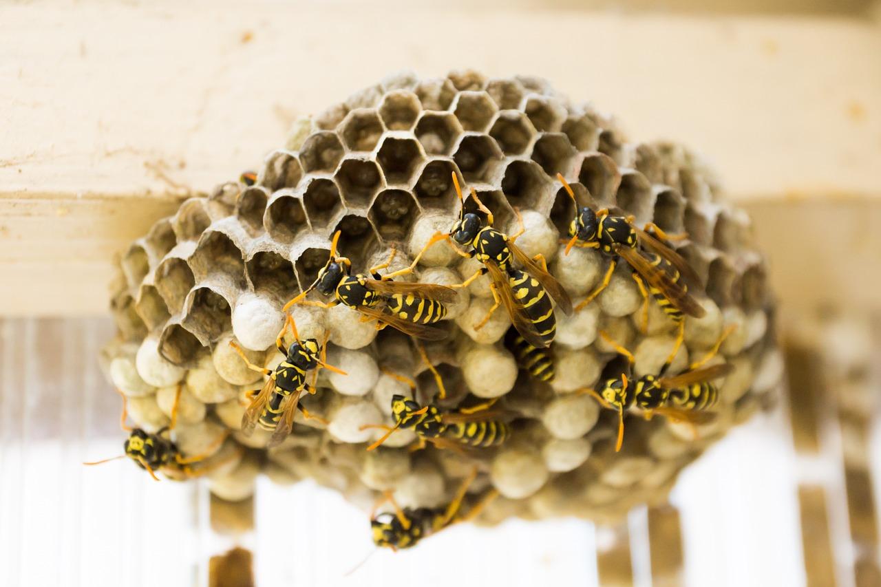 the-hive-335984_1280.jpg