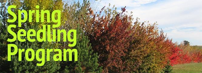 seedling program