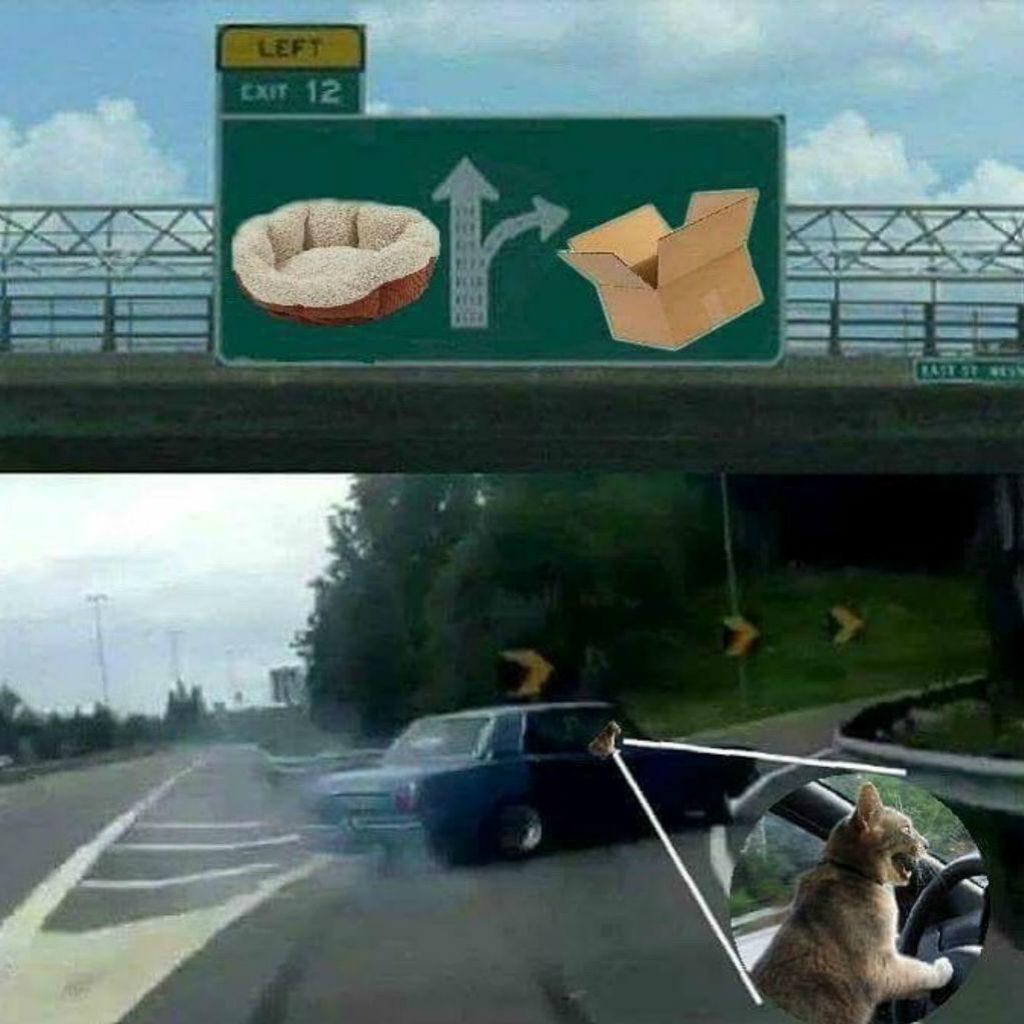 Driving cat memes