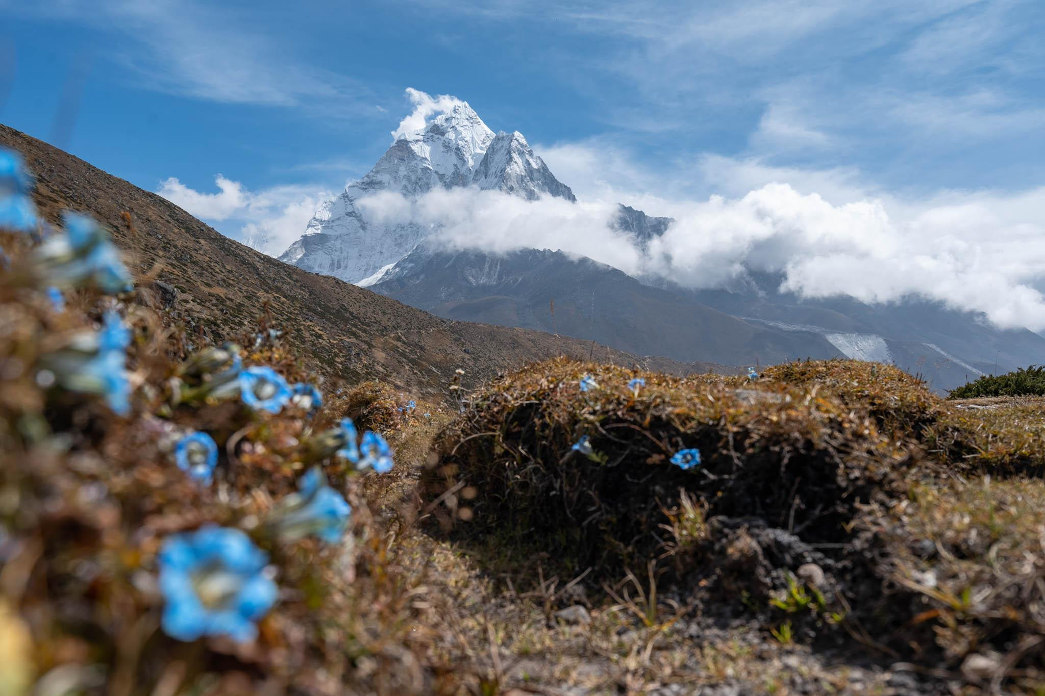 Small blue flowers and a view of Mount Everest