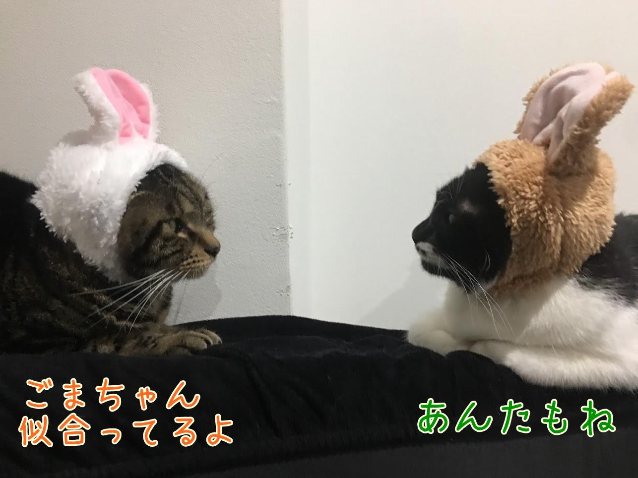 ハロウィンと猫のコスプレ