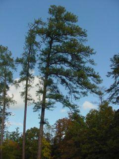 Trees at Richmond National Battlefield Park