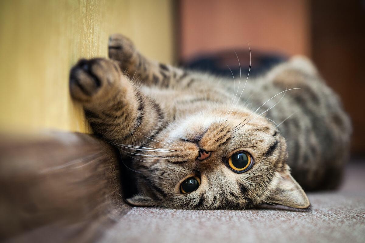malgré leur besoin d'indépendance, les chats aiment passer du temps avec leurs propriétaires