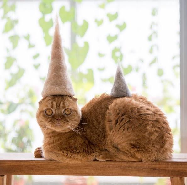 猫毛フェルトの作り方!猫の抜け毛で人形を簡単ハンドメイド!細かい洗い方も