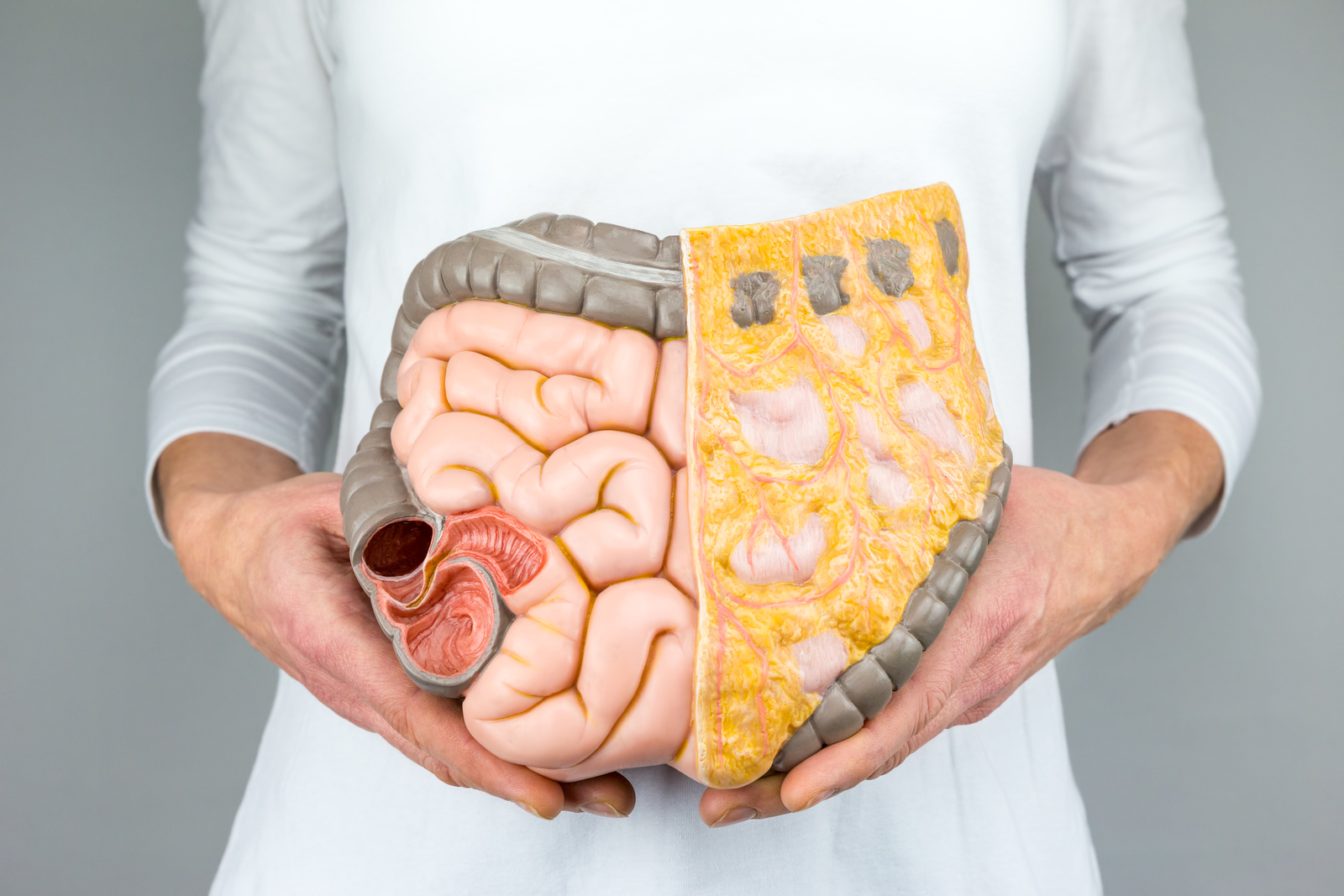 The Effects of Bad Gut Bacteria On The Body and What You Can Do About Them 2