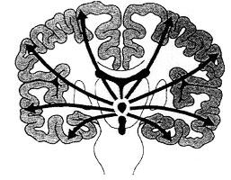 The abnormal impulses originate from centrencephalon and the cerebral cortex