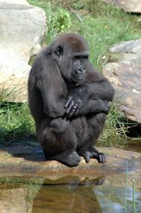 Le squat, indicateur d'une bonne santé du dos et des membres inférieurs