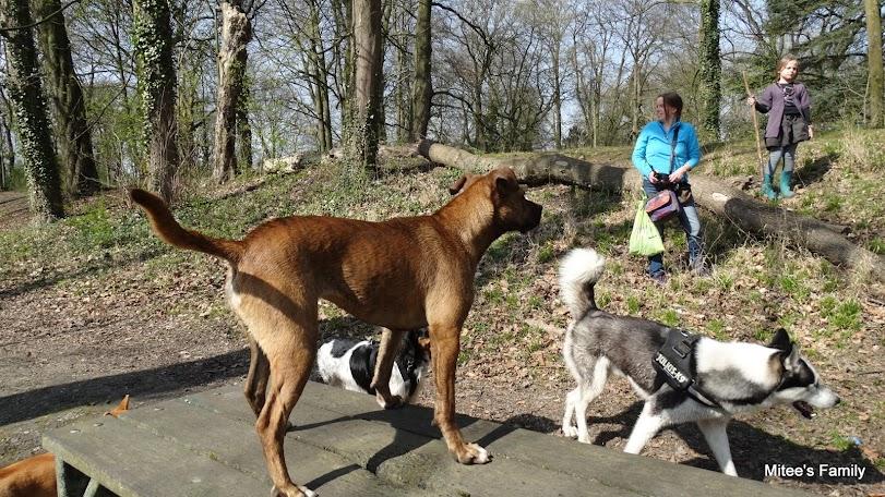Balades canines en Nord (59)/Pas de Calais (62) - Boulogne-sur-Mer, Calais et Lille - Page 4 UubyqETtrDixjS9cBax9xQUMfAsEx4tjA2YJC1GjXhg=w958-h456-no