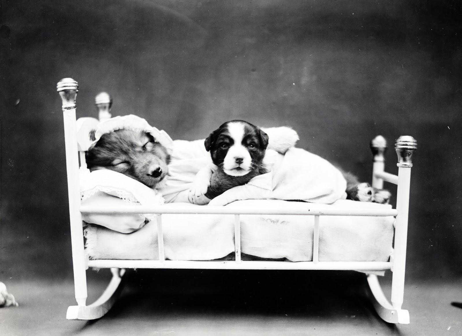 puppy-bedtime-vintage-photo.jpg