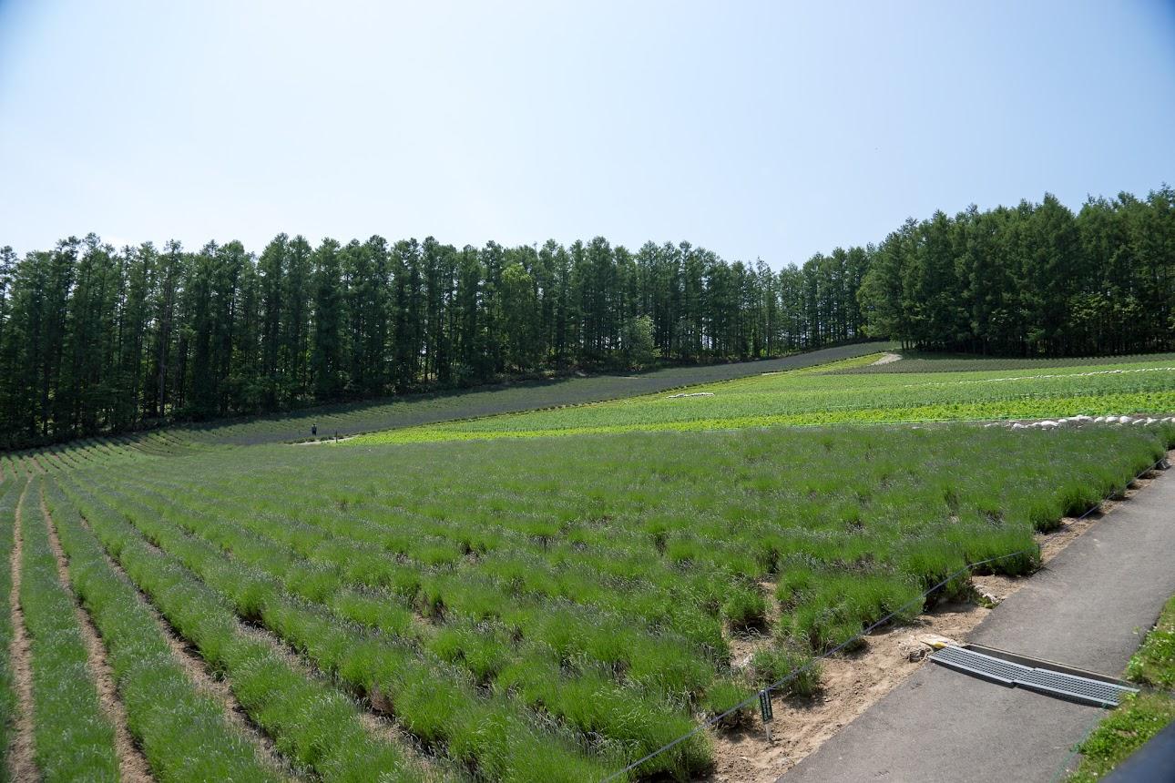 森の彩り畑