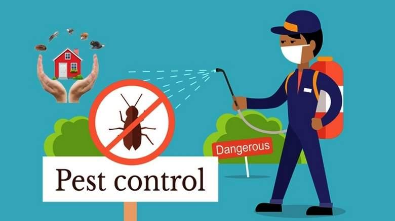PEST CONTROL TIPS YOU NEED TO KNOW! - Night Helper