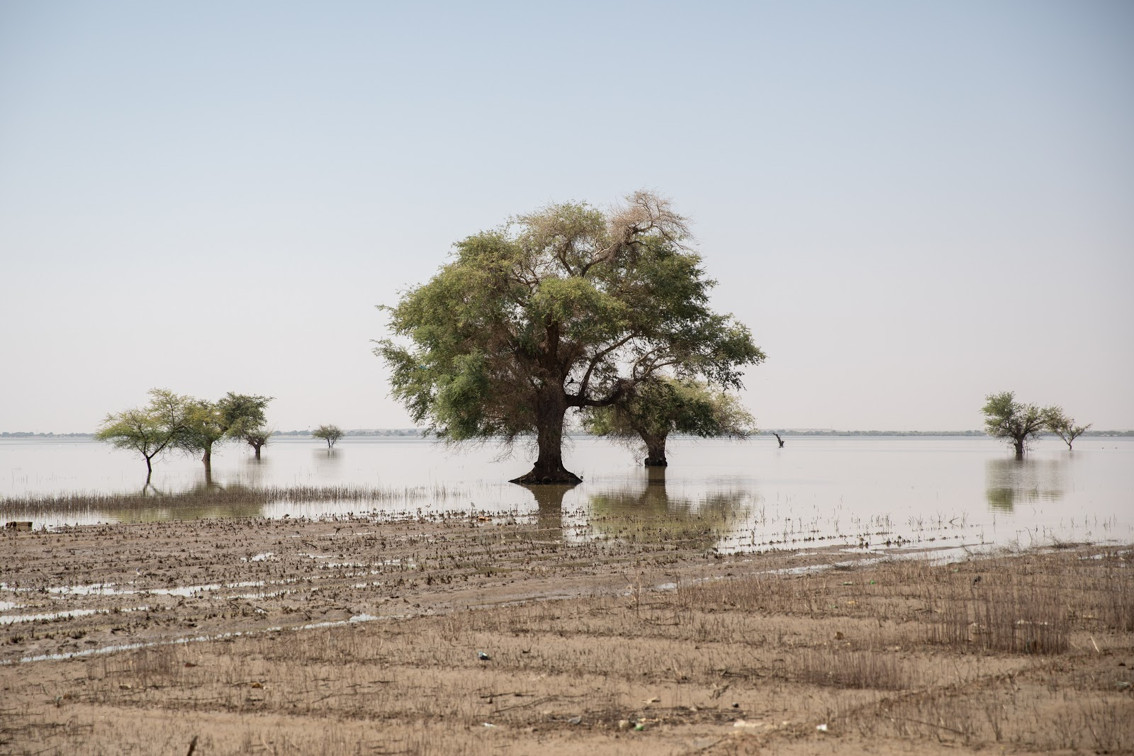 Agriculture land flooded by water in SHuqaylab Al Khour village