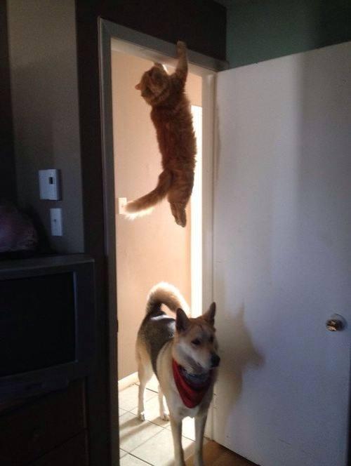 Yeah! I am a curtain