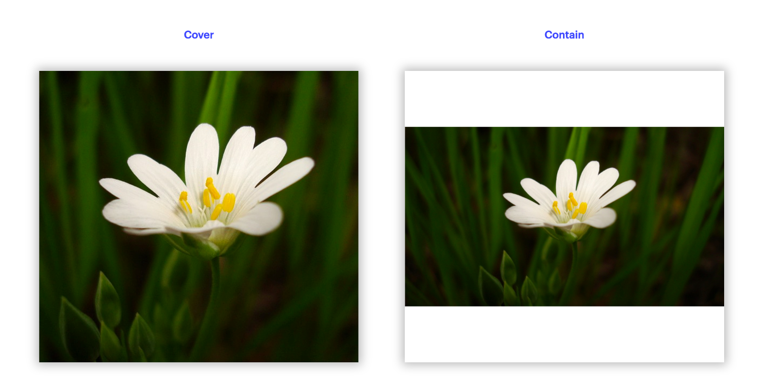 Webflow Background images - cover vs contain
