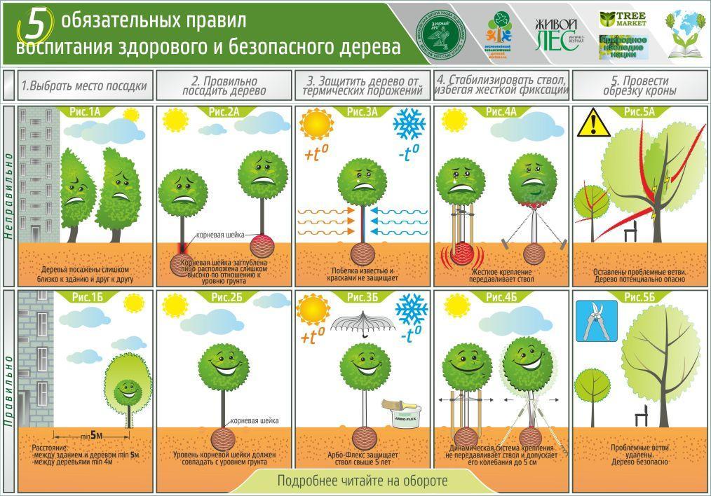 5 правил воспитания здорового и безопасного дерева
