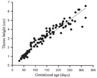 Évolution de la hauteur thoracique foetale de l'alpaga