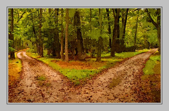Two roads in the wood