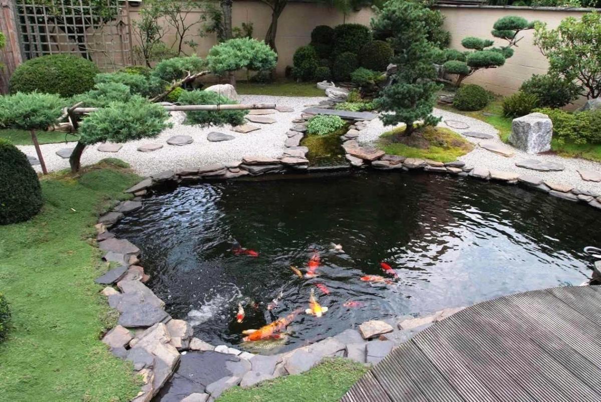 Tiểu cảnh trước nhà là bể nước nên đặt bên trái ngôi nhà