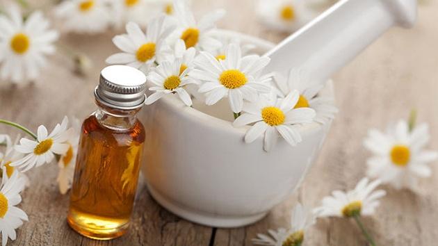 dầu hoa cúc