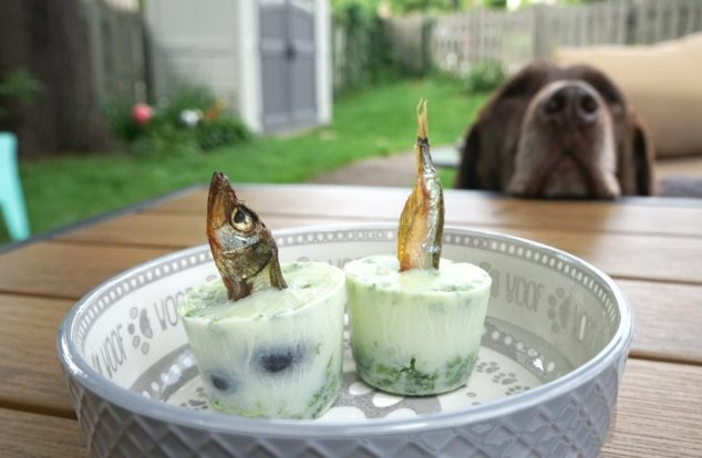 Frozen dog treats with freeze dried fish popsicle sticks in a dog bowl with dog in background.