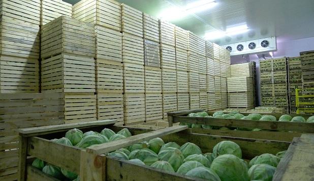 Картинки по запросу промышленные холодильники для хранения фруктов