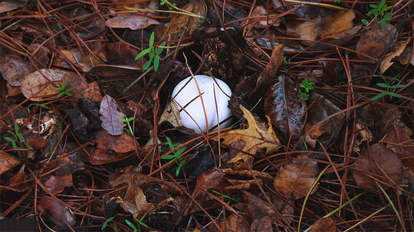 Mushroom 1.jpg