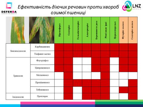 Фунгіцидний захист озимої пшениці від DEFENDA фото 2 LNZ Group