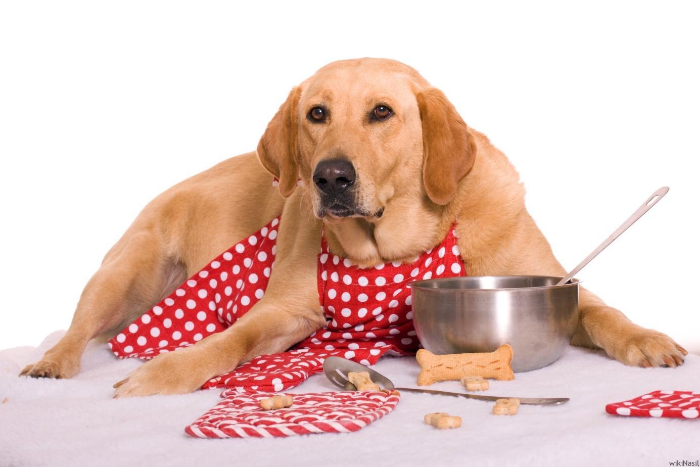 köpek, iç mekan, kahverengi, ten rengi içeren bir resim Açıklama otomatik olarak oluşturuldu