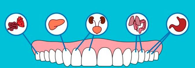 odontologia neurofocal que es