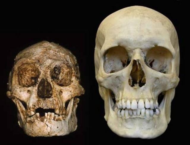 foto-peneliti-mulai-periksa-gigi-manusia-hobbit-dari-flores.jpg
