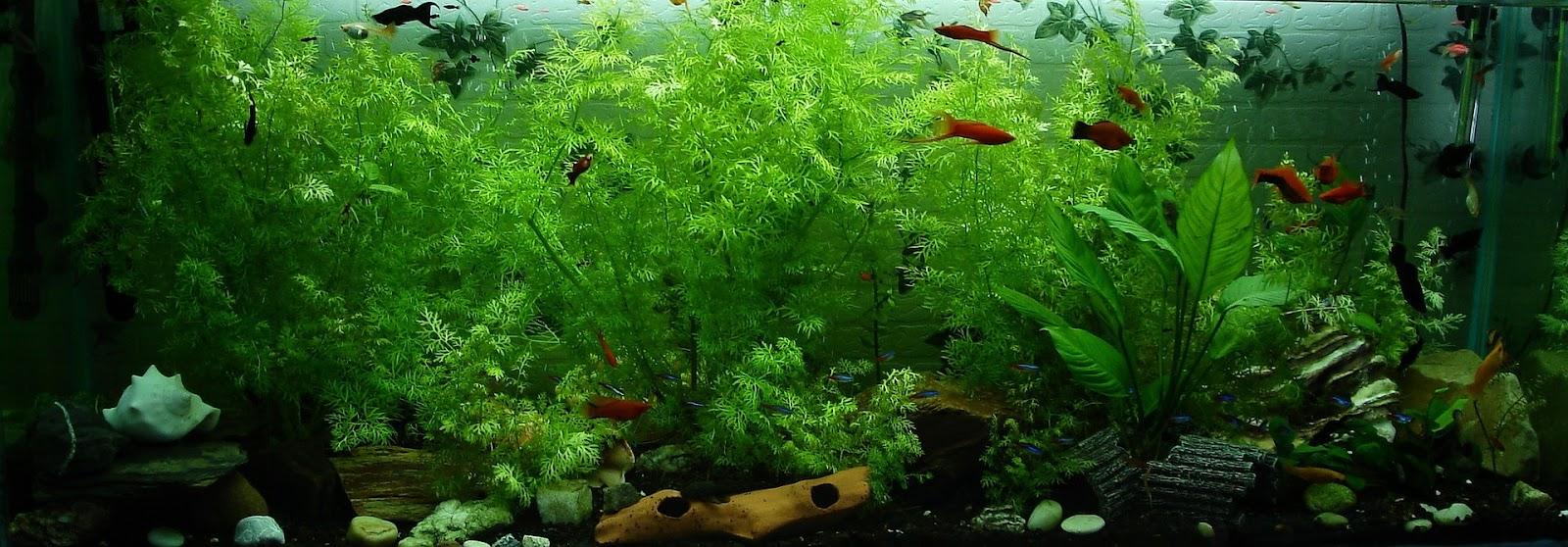 Large planted aquarium