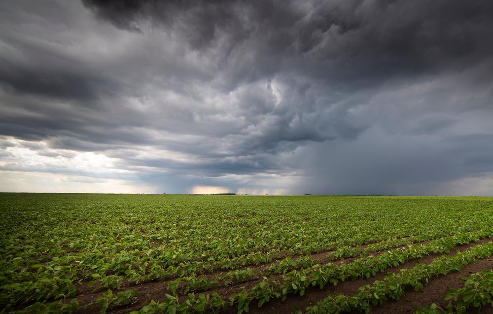 A chegada das chuvas pode ser uma luz no fim do túnel para os produtores. (Fonte: Shutterstock)