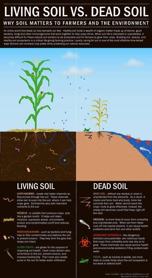 Image result for INFOGRAPHIC ON SOIL ECOSYSTEM