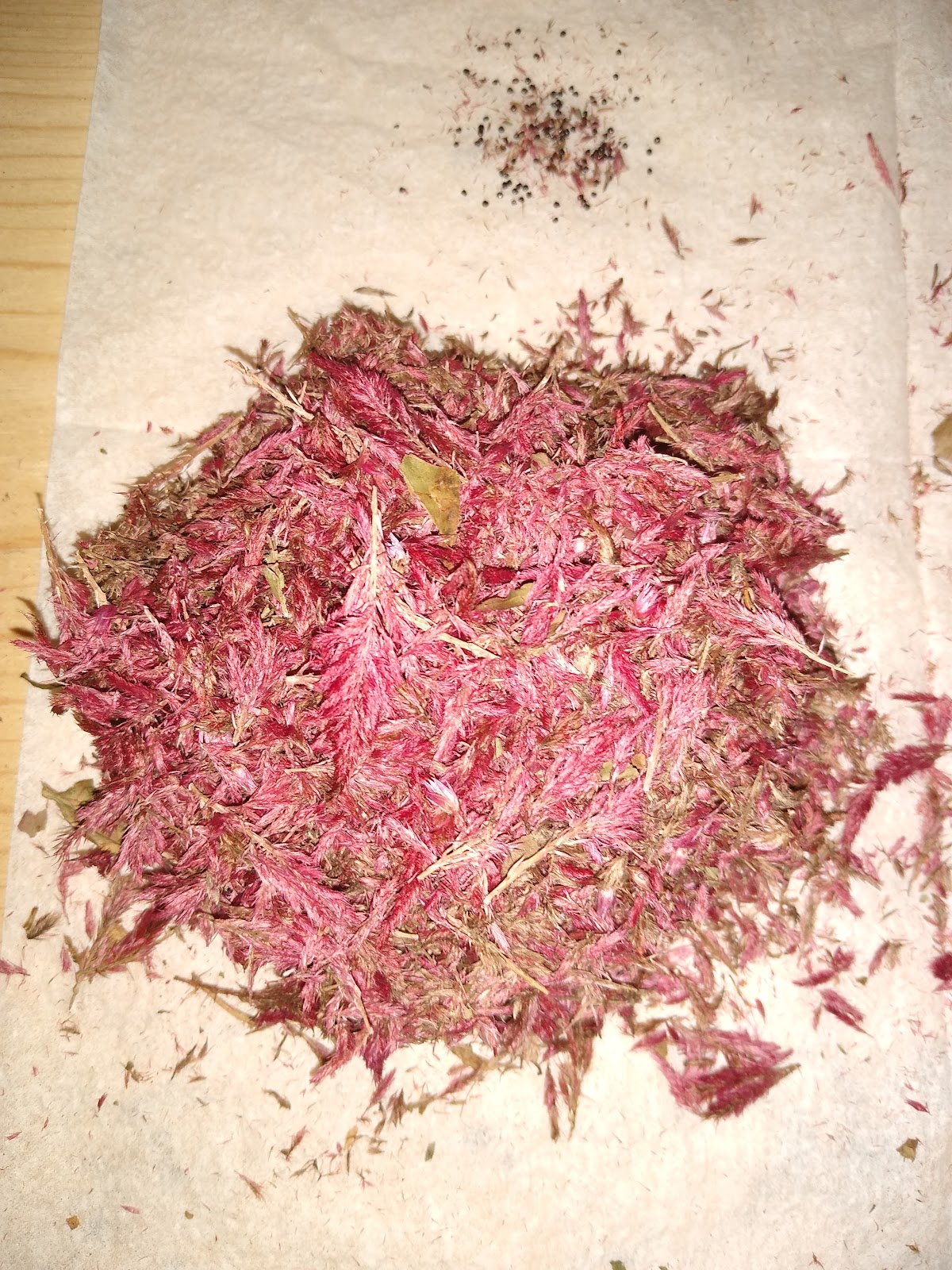 Pile of dried celosia petals
